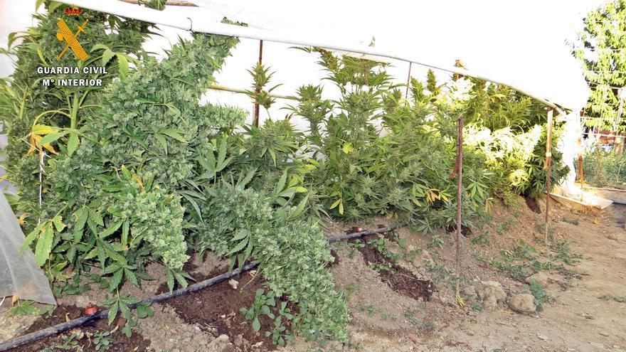 Detenidas dos personas tras desmantelar un punto de cultivo y venta de marihuana en La Coronada (Badajoz)