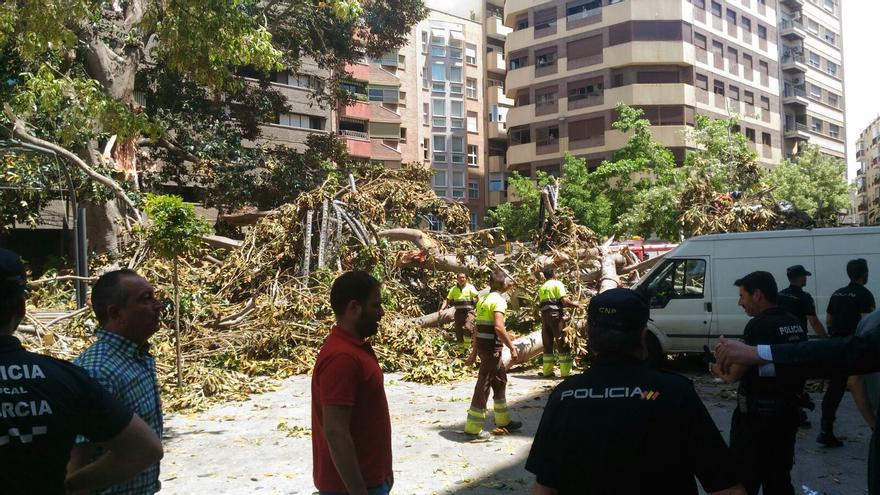 Parte Del Ficus De Santo Domingo Cae Causando Graves Destrozos En La