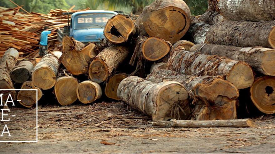 Tala de madera en el Amazonas.