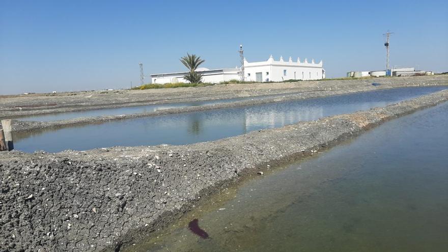 Canarias pierde la oportunidad para criar pepino de mar, el nuevo producto estrella en el mercado chino