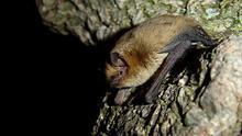 Murciélagos: guardianes de la noche contra las plagas de la huerta