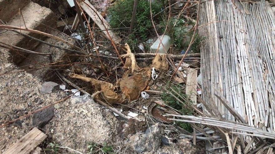 Animal en proceso de descomposición, en la zona de Los Toscales