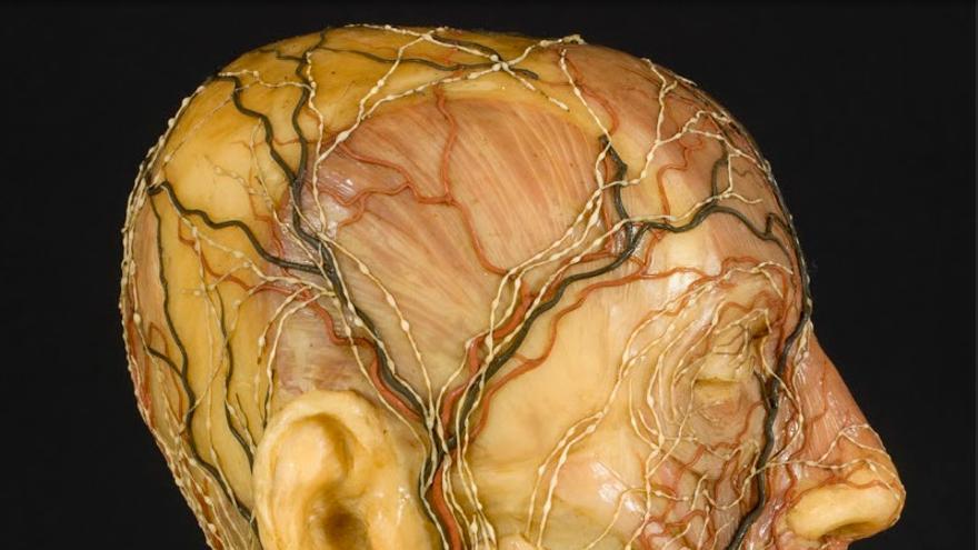 Carne y cera: el arte anatómico de la ilustración española