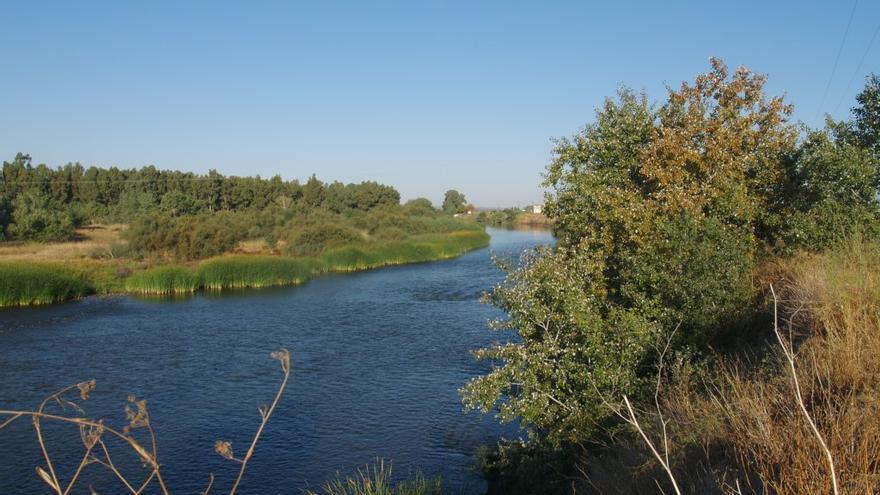 Río Tajo en las cercanías de Talavera de la Reina. Foto: MAGRAMA.