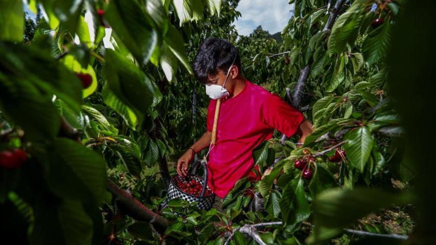 El empleo extranjero sube al cierre de abril por la agricultura