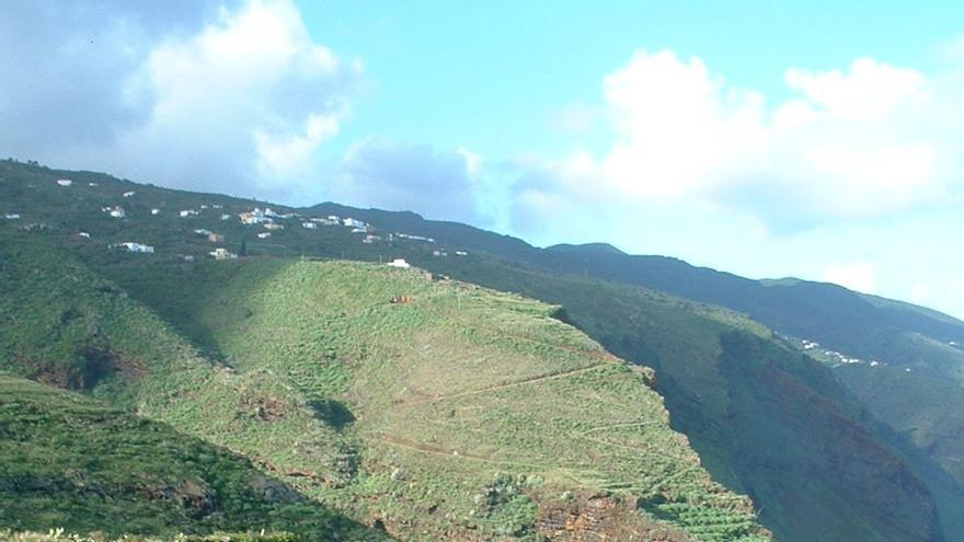 Cultivos de ñame en Gallegos, en Barlovento. Foto cedida por la Agencia de Extensión Agraria de Los Sauces.