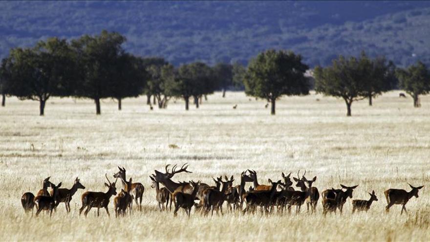 """Ecologistas denuncian obras """"ilegales""""dentro del Parque Nacional de Cabañeros"""