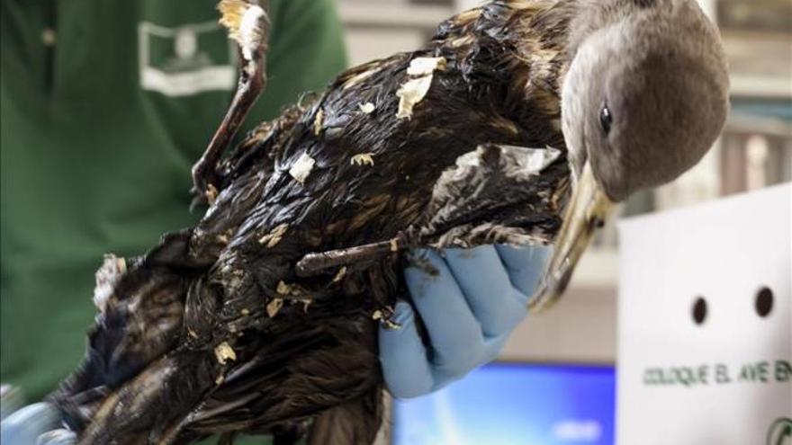 Un ave manchada por el fuel del pesquero ruso. Foto:EFE