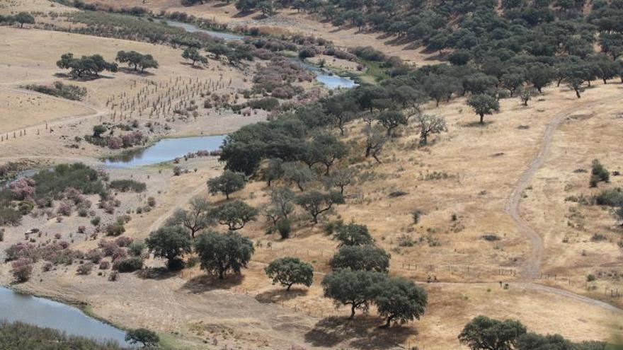 La dehesa ibérica desafía al cambio climático
