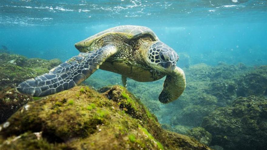 Obama visita la mayor reserva marina del mundo en Hawai recién creada por él