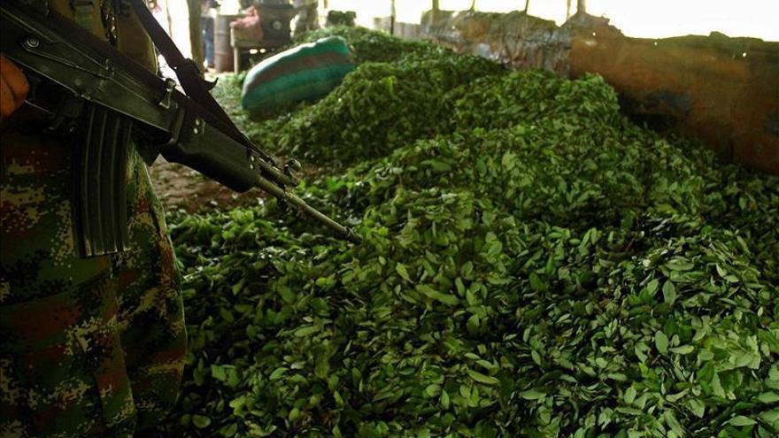La ONU valora los avances en sustitución de cultivos ilícitos en Colombia