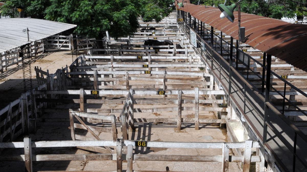 El Mercado de Liniers, sin vacas por los 14 días del cese de comercialización.