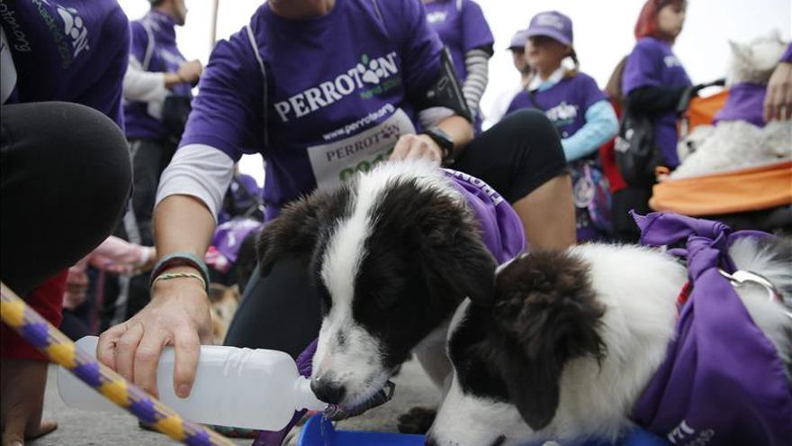 Cientos de perros y sus dueños participan en Perrotón, contra el abandono