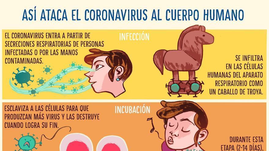 Así ataca el coronavirus