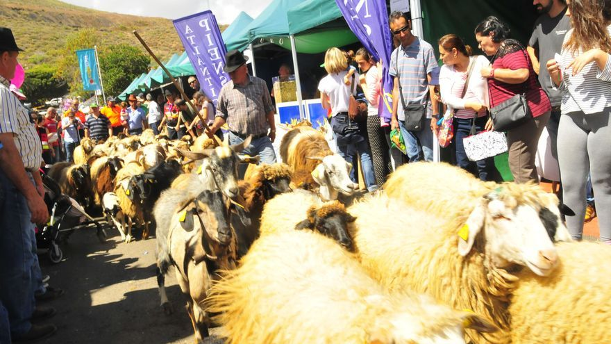 Feria Insular de Ganado de Gran Canaria.