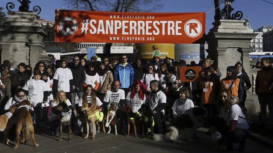 """Casi mil perros participan en la VI edición de la """"San Perrestre"""" en Madrid"""