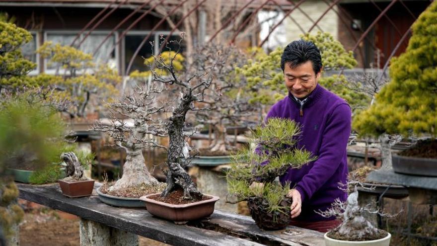Estos son los beneficios del bonsái, una forma de cultivo milenaria