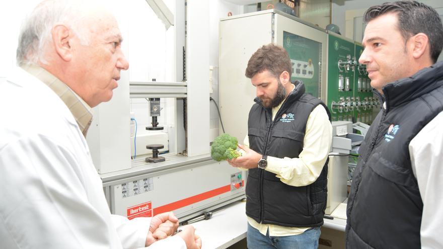 Investigación en la UPCT sobre el brócoli Bimi