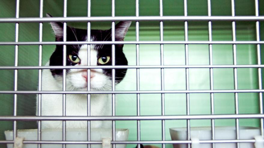 Gato en el centro de adopción de Barcelona. Foto: Eva San Martín