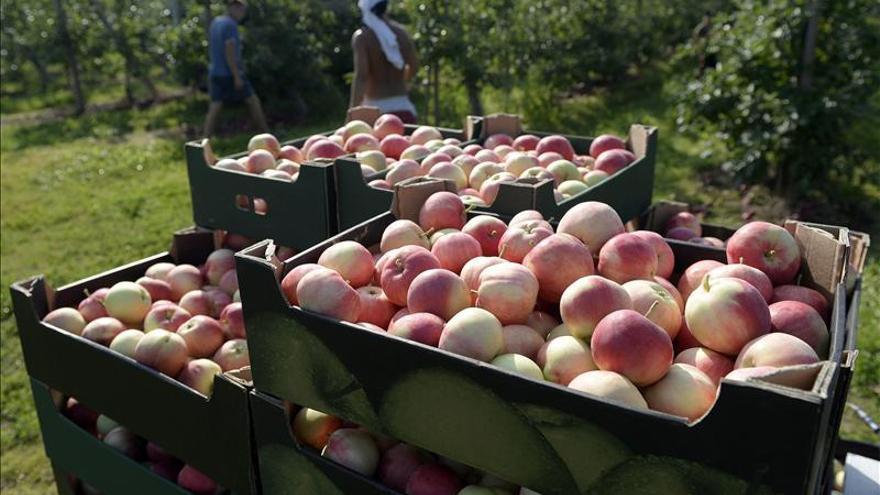 """Polonia recurrirá a solidaridad europea por """"guerra de la fruta"""" con Rusia"""