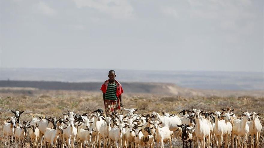 FAO indica que la descoordinación política merma la lucha contra el hambre en los países pobres