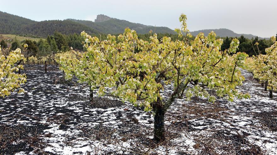 Manzano con nieve, El Garañón