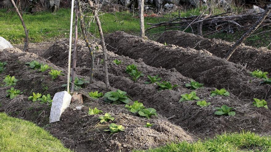 Convocadas ayudas a la instalación de jóvenes agricultores y a la modernización de explotaciones agrarias