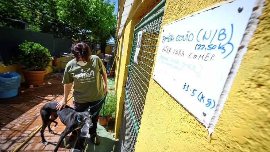 Bajan las adopciones y crecen las cesiones de perros a las protectoras por la crisis