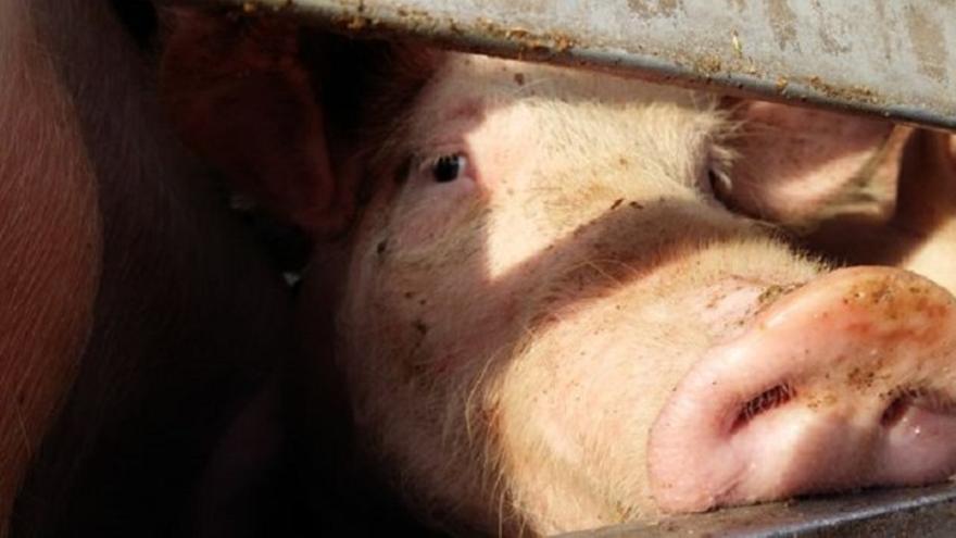 En los últimos meses los proyectos para instalar explotaciones de ganadería intensiva han proliferado en toda la región.