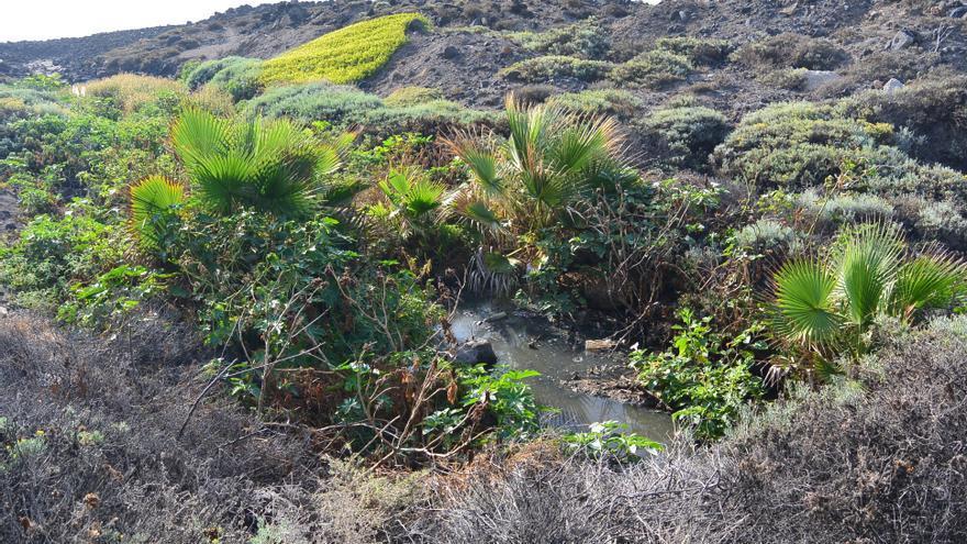 Vegetación en torno al riachuelo con aguas contaminadas que han sido expulsadas de forma ilegal