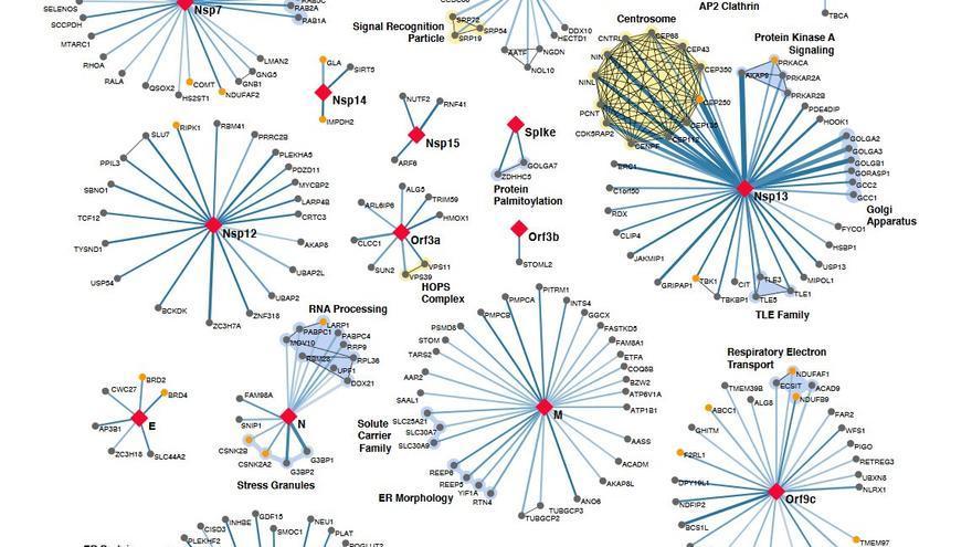 Parte del mapa de las interacciones entre las proteínas virales del SARS-Cov-2 (en rojo) con las proteínas humanas (gris). Los puntos amarillos representan potenciales dianas terapéuticas, es decir, moléculas en las que podrían actuar los fármacos.
