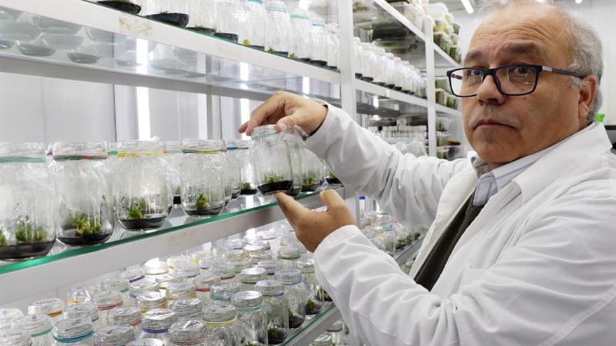 Descubren una planta antártica que puede actuar como filtro solar para humanos