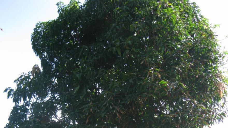 Mahmoud nació en Temanto, una pequeña aldea senegalesa compuesta de viviendas hechas de barro y paja y donde predomina el verde.