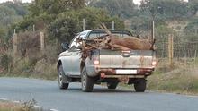 Resultado de la montería de 2013 en Las Cansinas (Monfragüe) / ECOLOGISTAS EXTREMADURA