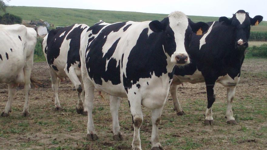 Cantabria destina 80.000 euros a ferias, concursos y exposiciones de ganado selecto bovino y otras especies