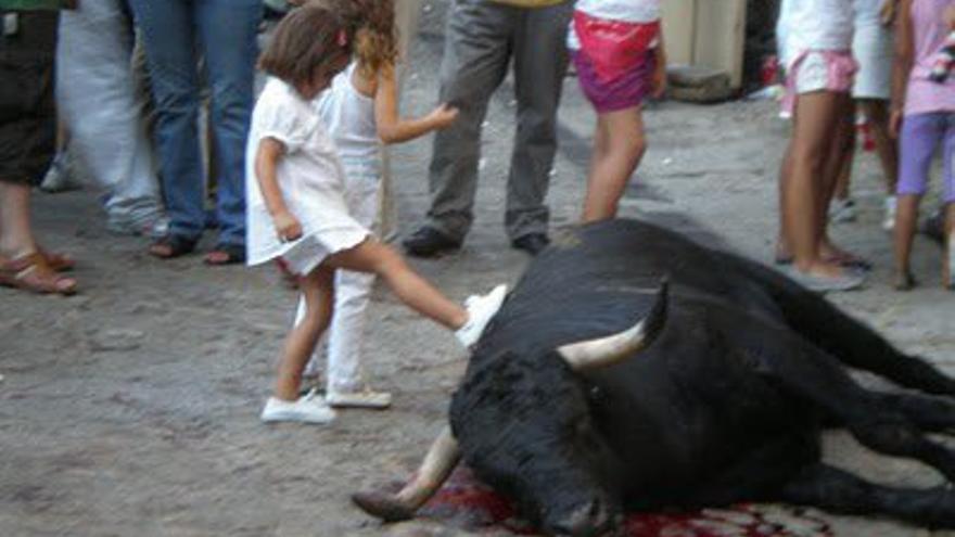 Maltrato animal (Foto: Pacma).