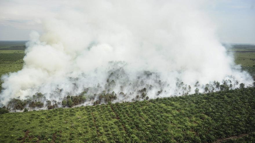 Papelera APP niega acusaciones de estar destruyendo turberas en Indonesia