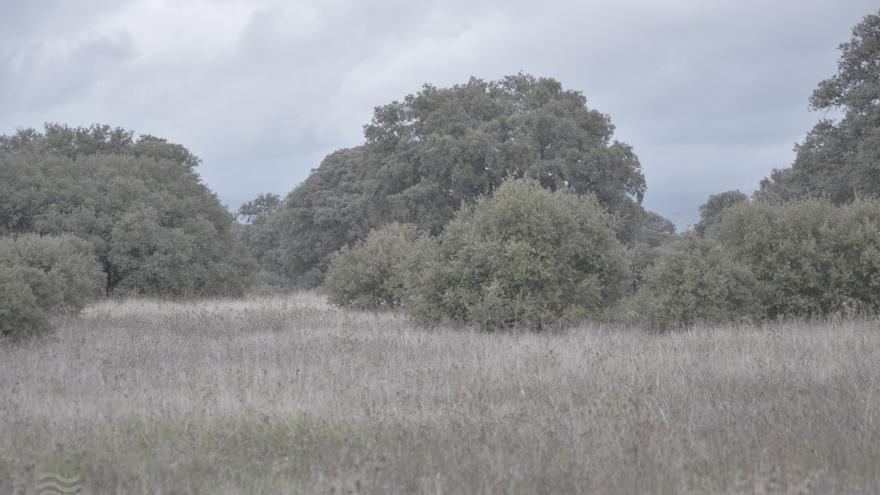 Nuevo examen para las Tablas de Daimiel: si no llueve lo suficiente y continúa la sobreexplotación, volverán a secarse