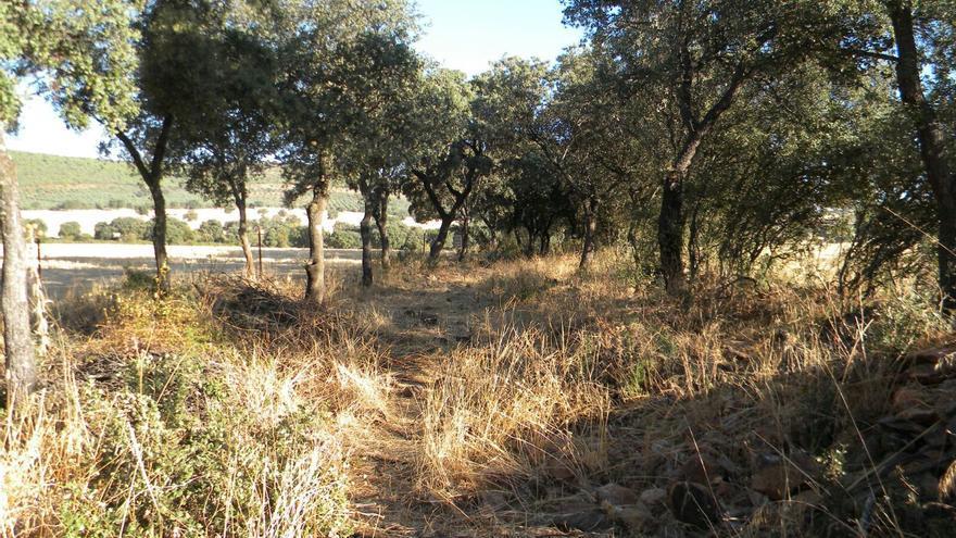 Camino invadido por vegetación y piedras de fincas colindantes