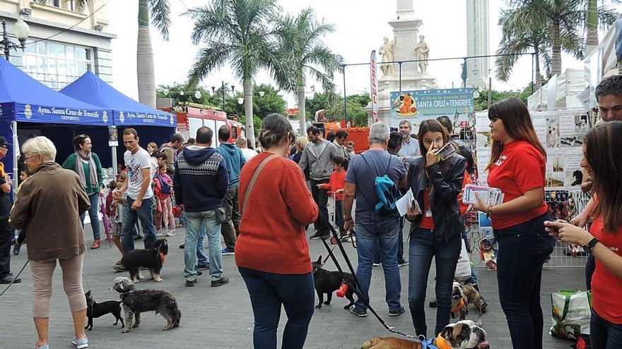 Edición anterior de un Día de los Animales en Santa Cruz, en la plaza de la Candelaria