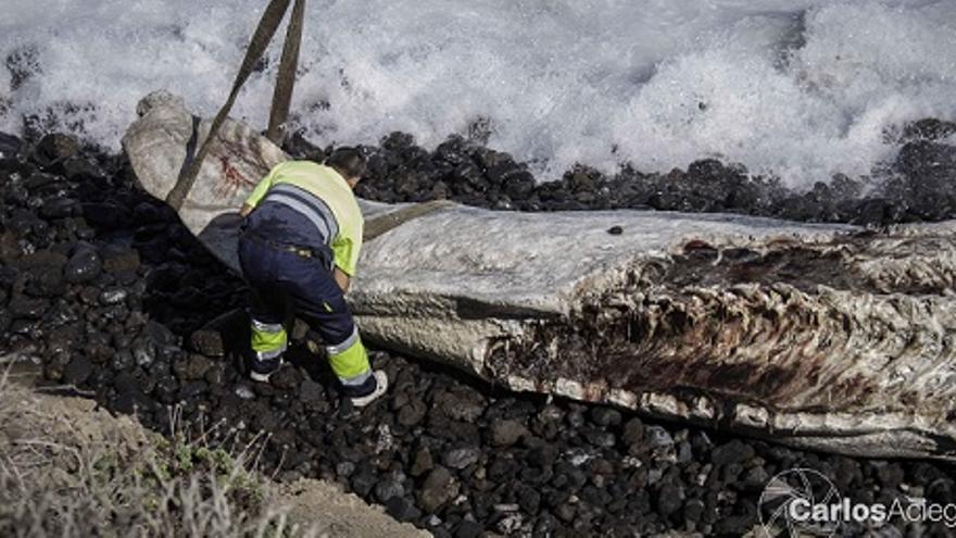 Imagen del trozo de ballena tomada por el fotógrafo Carlos Aciego.