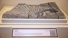 El hallazgo del reptil herbívoro más antiguo da nuevos indicios sobre la evolución