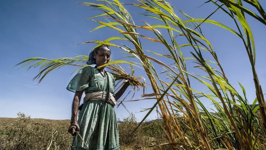 Etiopía sufre la mayor sequía en 50 años