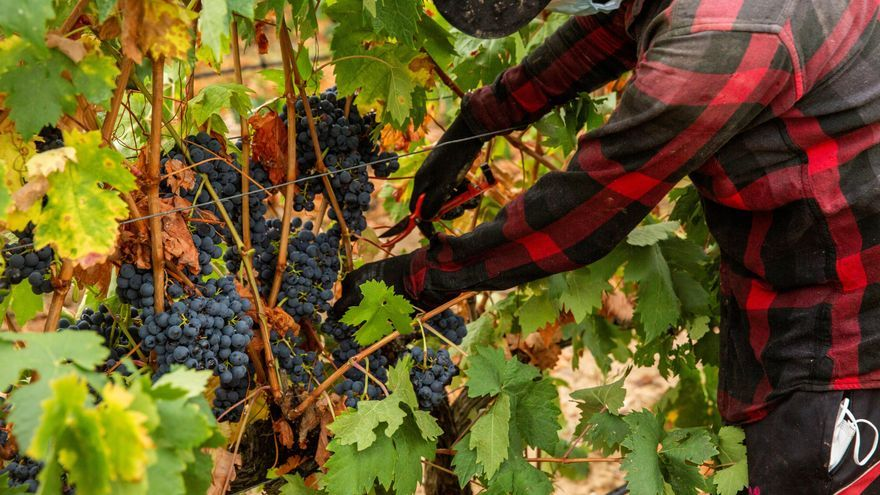El Gobierno aprueba norma que prorroga las autorizaciones para plantar viñedos