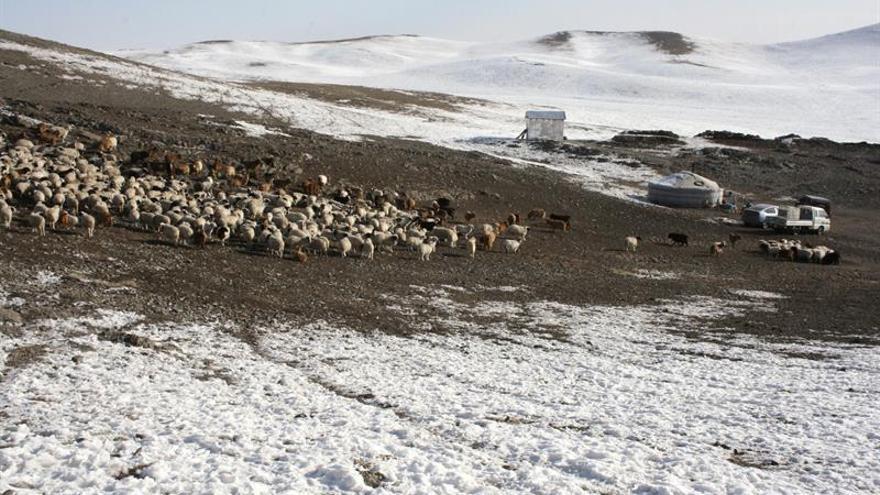 """El """"dzud"""" congela Mongolia y pone en peligro el futuro de sus nómadas"""