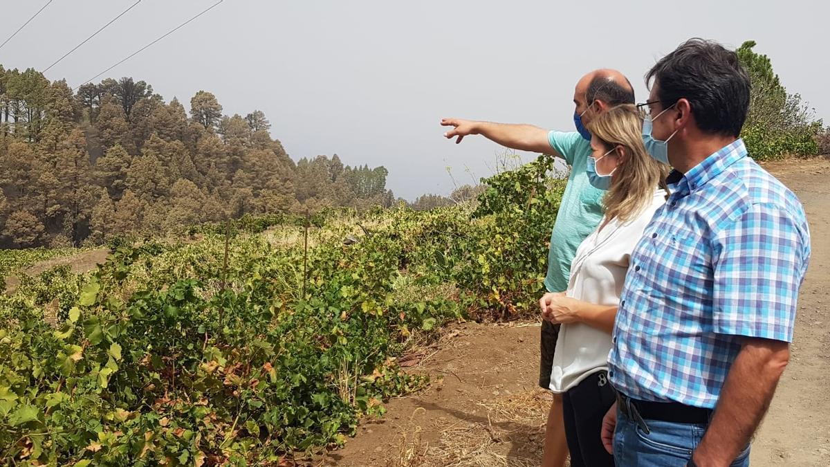 Visita de las autoridades a zonas agrarias afectadas por el fuego.