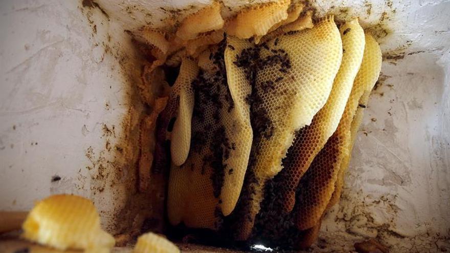 Hornos de abejas: en busca de una miel digna de gourmets