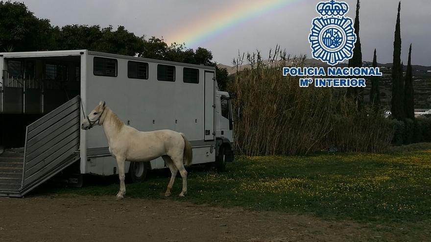 Detienen en Vélez a un hombre por maltrato animal y rescatan a cuatro equinos desnutridos
