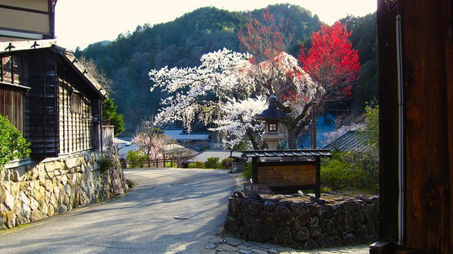 Cerezos en flor en Tsumago. Ancient Foodlore