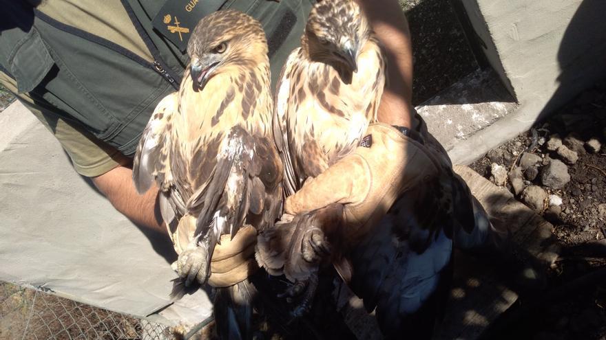 Las aves incautadas por la Guardia Civil.